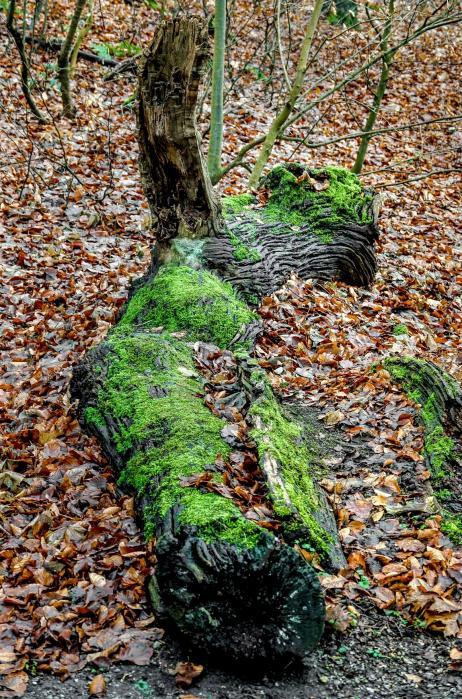 wdf  wupper digitale fotografie  blätter bäume stümpfe